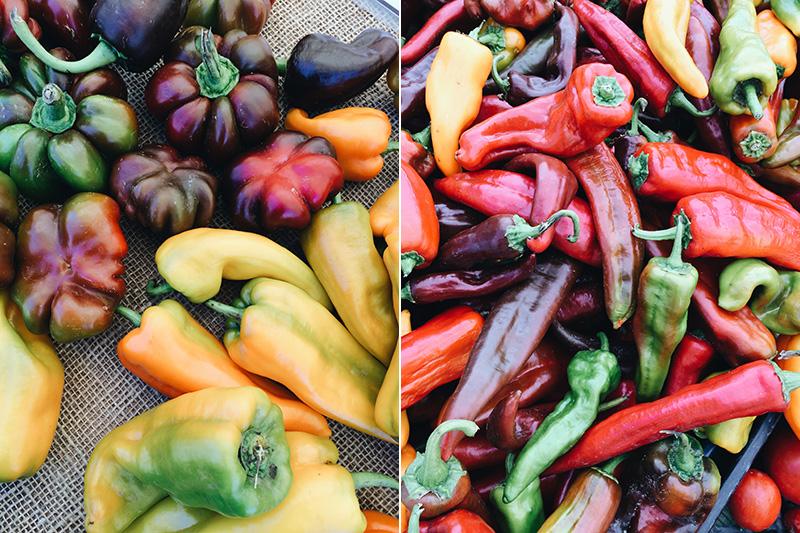 Colors at Farmers Market 1