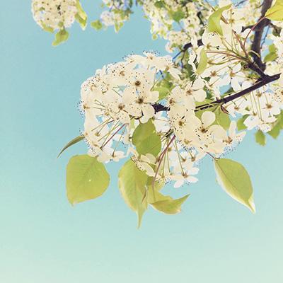 cherry blossom -ish 3